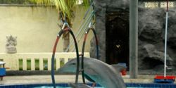 Close the Dolphin Resort Hotel in Bali