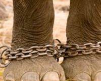 Stop cruel elephant training in Nepal