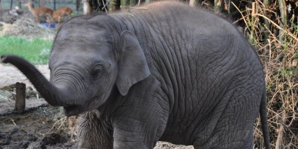 Sunder: Now and the Next Steps