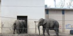Free Tembo & Sunda from the Topeka, KS Zoo
