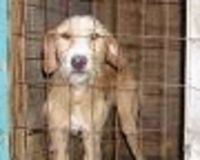 Abolishing Puppy Mills with MAXIMUM penalties!!