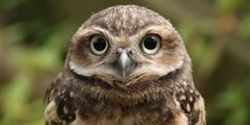 Encourage Home and Funds for Sanctuary of 200 owls in UK that is threatened