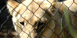 Ban the Sale of British Zoo Animals to Foreign Circuses