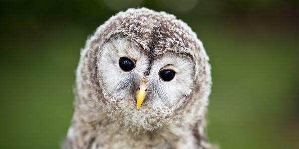 Owl, Care2