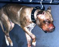 Ban Michael Vick from the NFL-Permanently