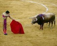 Help Stop Bullfighting!