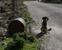 Please help the Chained (barrel) dogs of Greece.