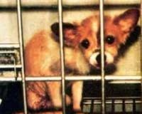 Protect experimental animals in Japan by the law revision