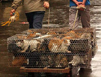 Report Animal Cruelty Related to the Beijing Olympics!