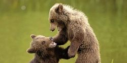 Say NO to Public Handling of Bear Cubs
