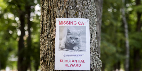Missing cat poster on tree