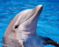 Help Save the Dolphins in NJ River!