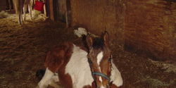 Stop Plans for Horse Slaughter in New Mexico