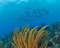Support the Expansion of Cayman's Marine Parks