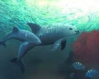Save the Vaquita Porpoise - the world's most endangered marine mammal!