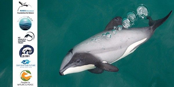 Hector and Maui's dolphin