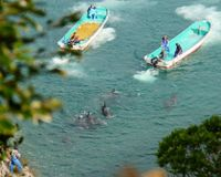 South Africans taking a stand against Taiji Dolphin Hunts