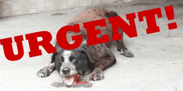 STOP BOSNIA FROM IMPLEMENTING KILL LAW!