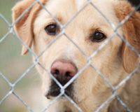 Help the U.S. Become a No Kill Nation!