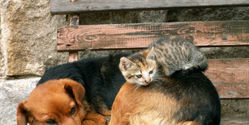 CANADA: Ban Imports of Dog and Cat Fur!