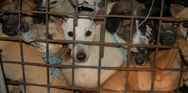 Abolish the Dog Meat Trade in the Philippines