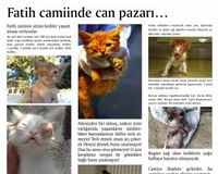 STOP the MASSACRE of CATS of FATIH MOSQUE- Istanbul, Turkey