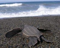 Bring Sea Turtle Activist's Killers to Justice
