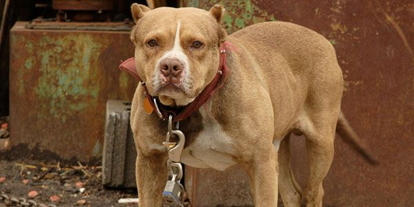Demand justice for chained dog that was attacked by police with pepper spray