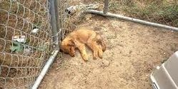 Start punishments for animal cruelty!