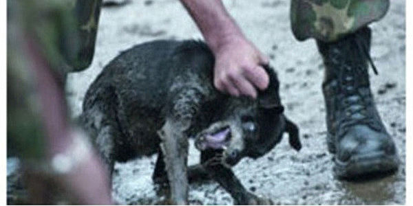 No Funding to Romanian Dog Killers in the European Union