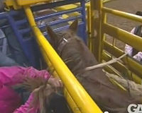 Horses Abused Dec 2012 , Caught on video in Las vegas