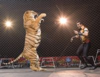 Justice for Bengal Tiger Killed in Mexican Circus