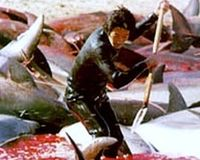 Stop Japan Killing Dolphins!