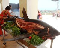IBEROSTAR AVERROES HOTEL HAMMAMET: ARRETER IMMEDIATEMENT DE PROPOSER DES BBQ DE VIANDE DE REQUINS !!