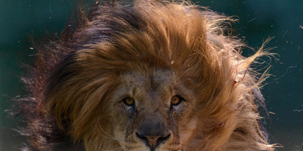 Demand Required Security of Big Cat Facility in California Despite Resistance!