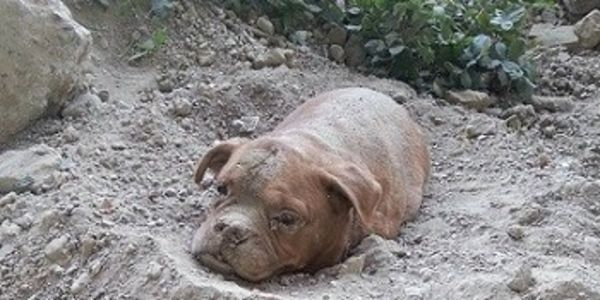 Dog Rescued After Being Found Buried Alive With Lead Attached To Sack Of Gravel