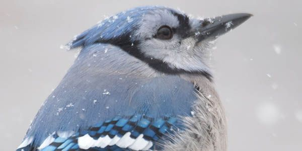 BC Hydro, Protect Migratory Birds from Your Hydroelectric Plant!