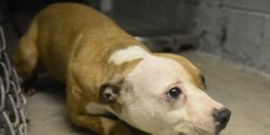 Inflict Harshest Sentence For Offenders of Largest Dog Fighting Ring