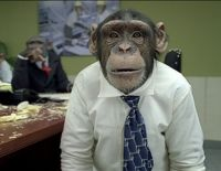 Thank CareerBuilder for Not Running Ads with Chimps