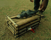Ban the South African Parrot Trade