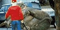 Elephants and Other Animals Suffering at the Hands of the Carson & Barnes Circus