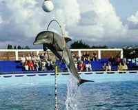 Is this what dolphins were meant for? NO the answer is no.