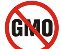 Stopping the Approval and Production of Genetically Modified Foods