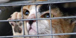 Stop the Secrecy and Killing in Animal Shelters