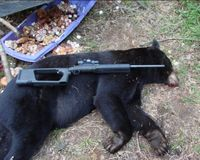 PLEASE ASK NEW HAMPSHIRE TO BAN BEAR BAITING