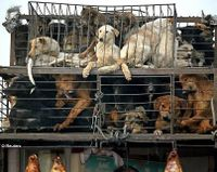 Lets boycott China until it stops its terrible cruelty to dogs.
