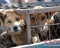 Sign Now, Help Stop The Dog & Cat Meat Trade