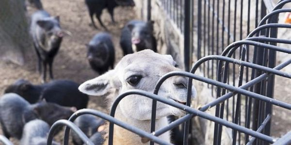 URGENT! Ukraine- Do Not Let Your Zoo Animals Starve to Death!!