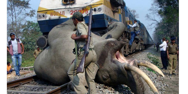 Prevent Elephants from being Killed by Trains
