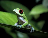 Stop destroying rainforest habitat!